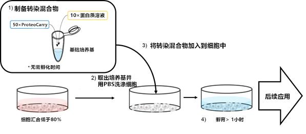 新型蛋白转染试剂:ProteoCarry