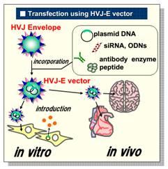 GenomONE™-Neo EX 仙台病毒包膜转染试剂