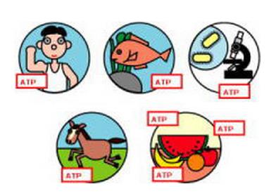 ATP荧光检测仪C-110