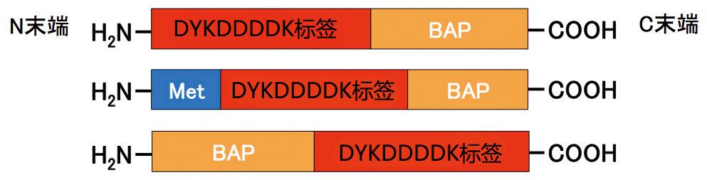Wako亲和标签(汇总)