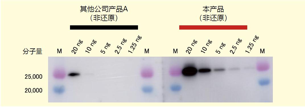 细胞外囊泡标记 单克隆抗体