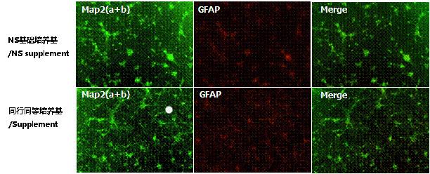 NS神经细胞基础培养基