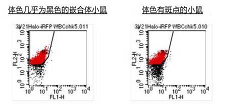 ES细胞・iPS细胞培养用血清代替品
