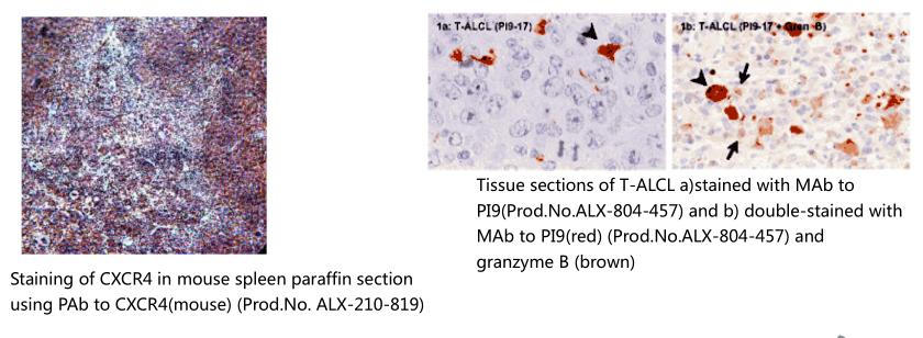 间质干细胞标记物