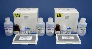 血蓝蛋白(KLH)(T细胞依赖性抗原)大鼠免疫球蛋白M(IgM) ELISA试剂盒