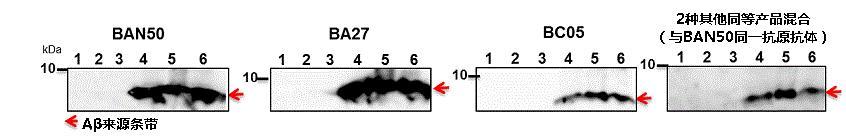 抗β-淀粉样蛋白抗体(BAN50/BNT77/BA27/BC05)