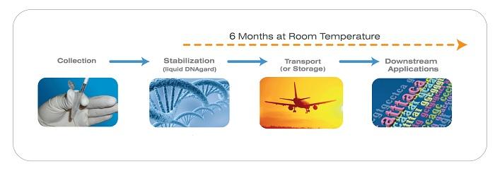 DNAgard tissue|组织细胞DNA室温保存|室温稳定剂-金畔生物
