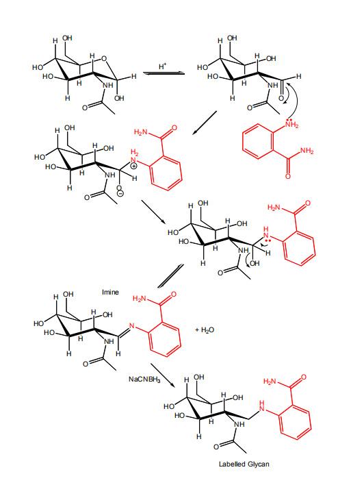 LudgerTag 2-氨基苯甲酰胺多糖标记试剂盒 (LT-2AB-A2)